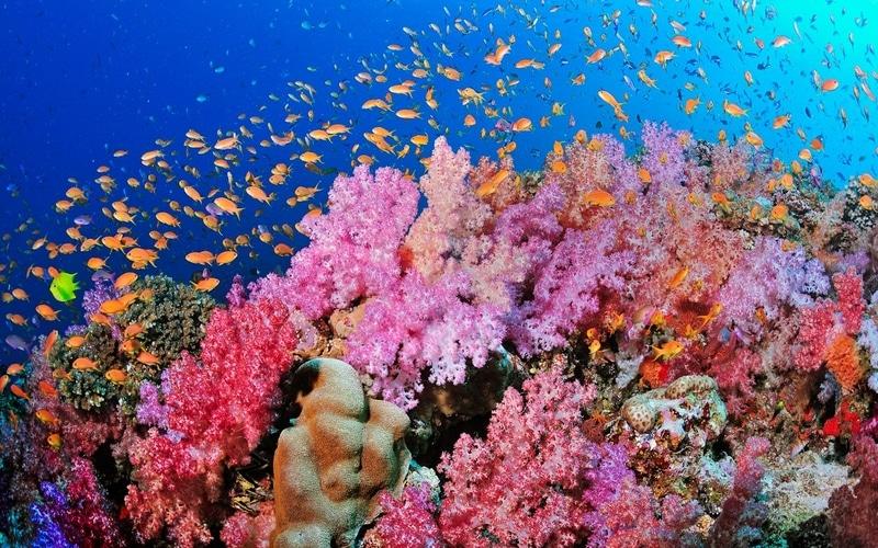 korall5