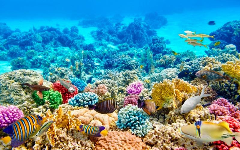 korall56