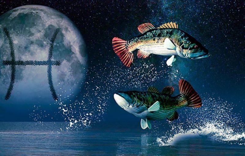 kamen-ryby-6
